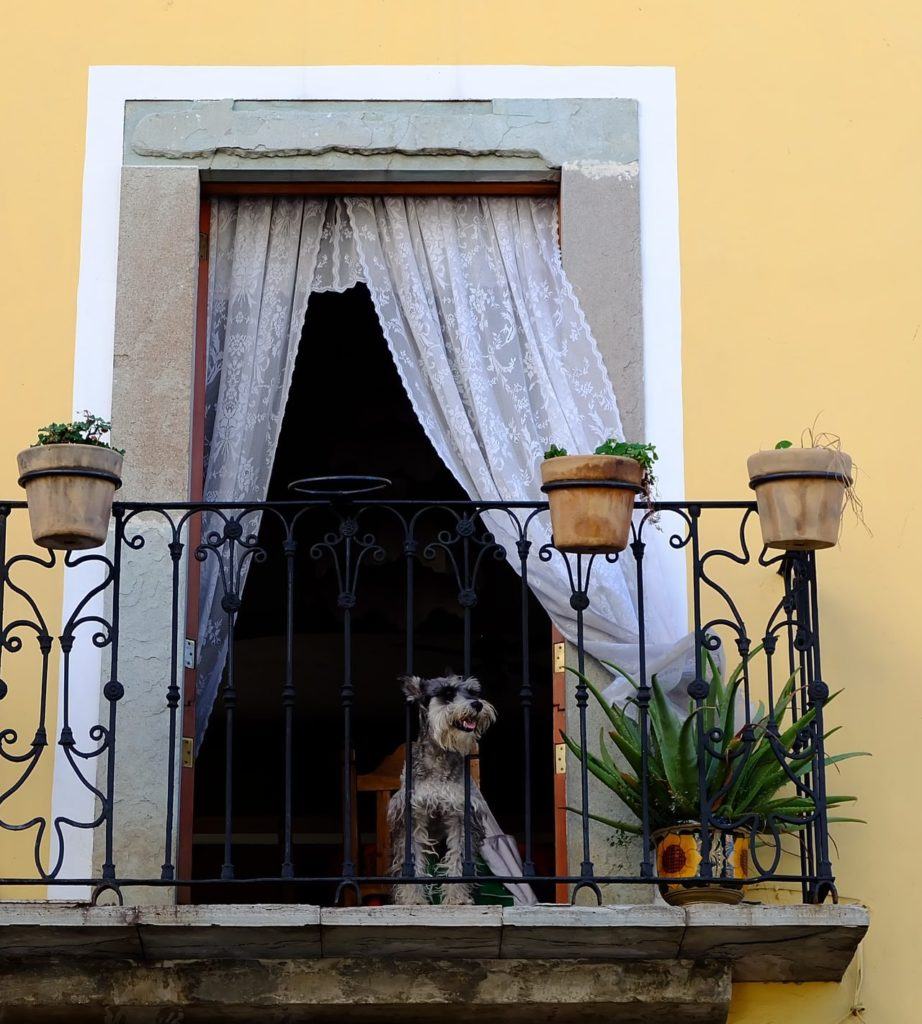 Haustier Balkon sicher